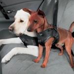 Что следует помнить, отправляясь в путешествие с собакой?