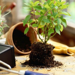 Как правильно организовать уход за комнатными растениями в зимнюю пору?
