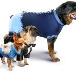 Качественная одежда для вашего домашнего питомца в интернет-магазине Kristadogcom