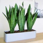 Комнатные растения с доставкой на дом
