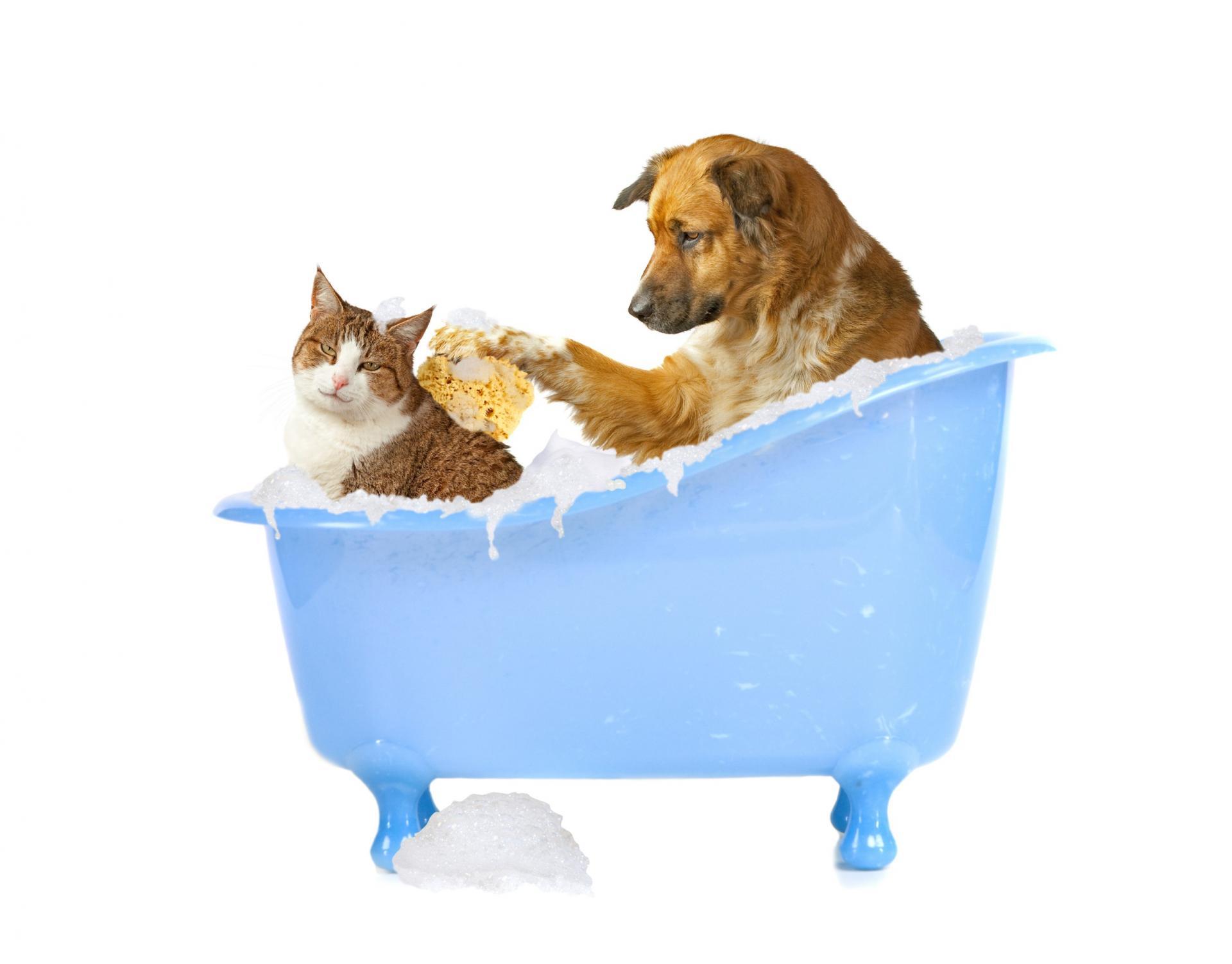 Как правильно обрабатывать собаку противоблошиным шампунем