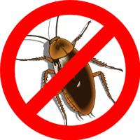 Профессиональное уничтожение тараканов