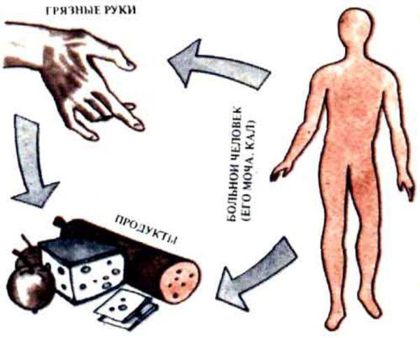 Пути заражения гепатитом и симптомы болезни